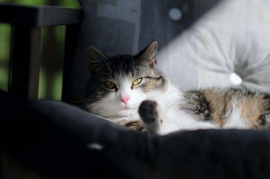 고양이, 눈, 동물의 무료 스톡 사진