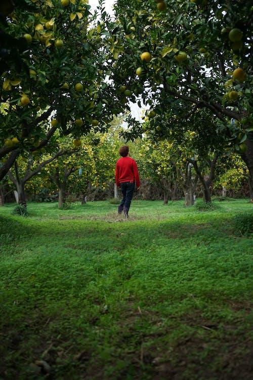 Boy in Red Shirt Walking on Green Grass Field