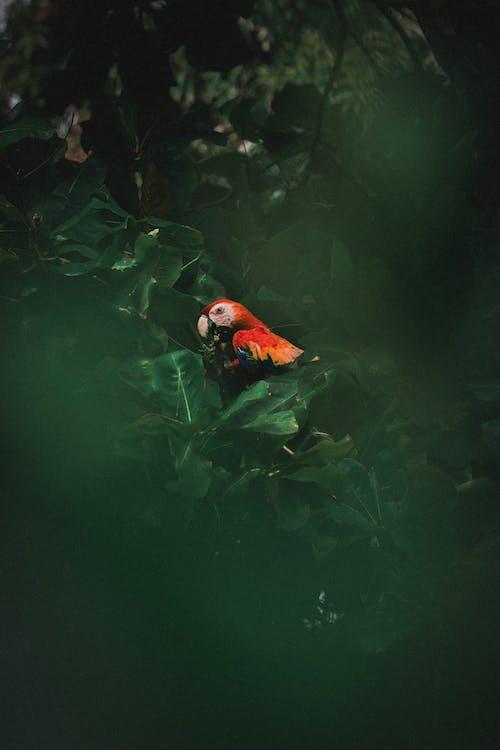 Orange and Black Bird on Water