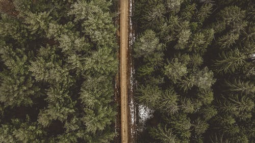 Aerial Shot of Road Between Pine Trees