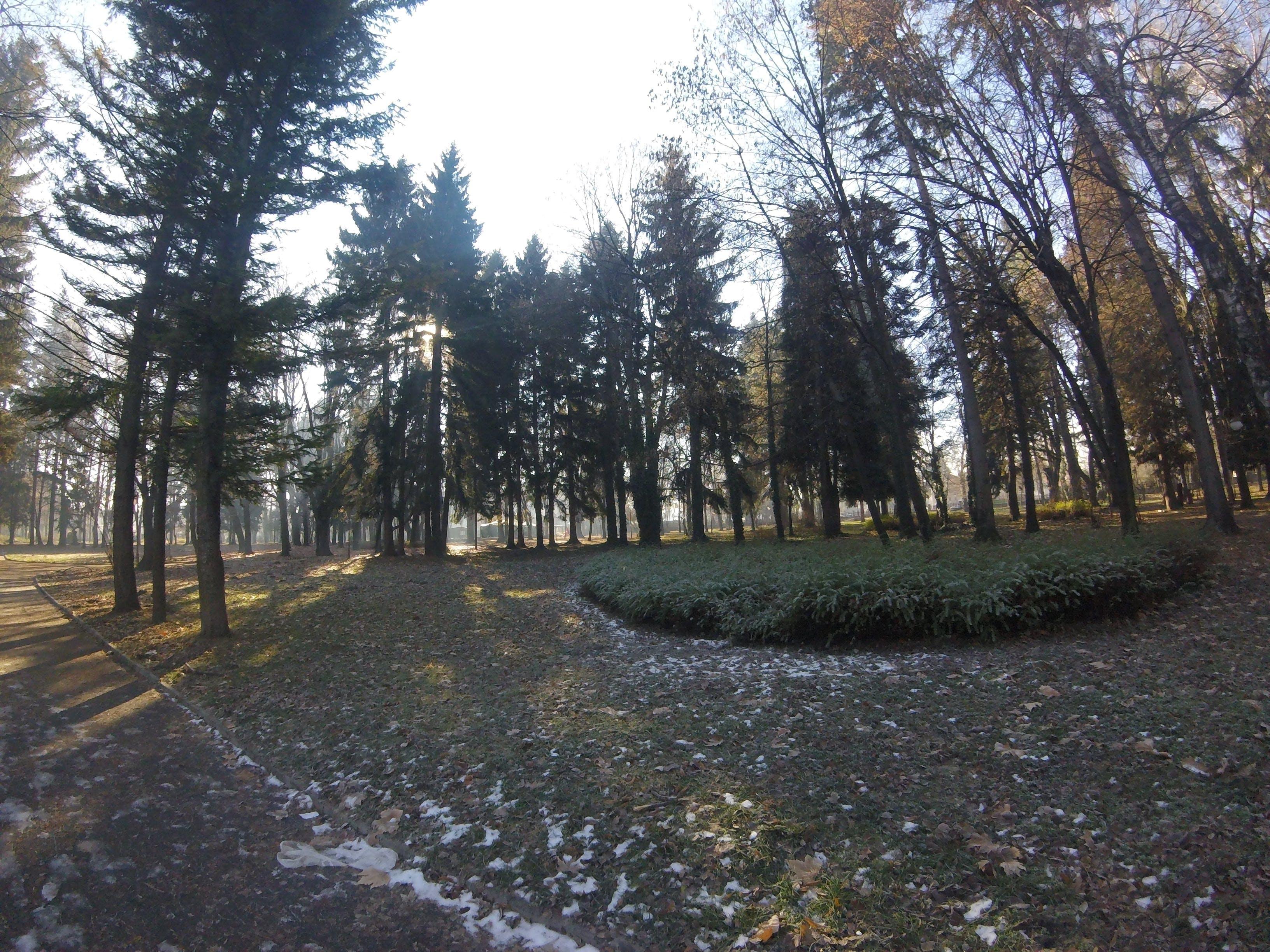 Free stock photo of walk through a park