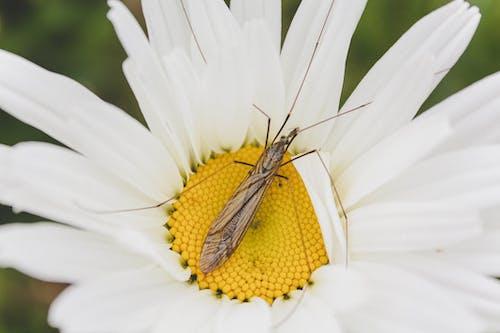 Ảnh lưu trữ miễn phí về côn trùng, cú đánh gần, chụp cận cảnh, Hoa màu trắng