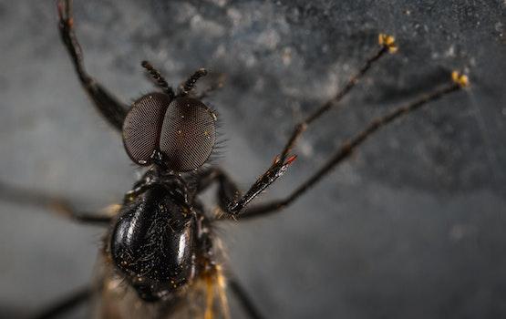 Close Up Photo Black Housefly