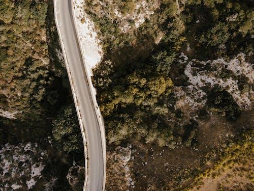 Fotos de stock gratuitas de al aire libre, arboles, autopista