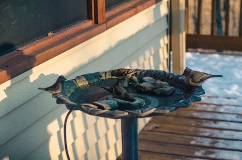 Darmowe zdjęcie z galerii z kąpiel ptaków, na zewnątrz, śnieg, woda