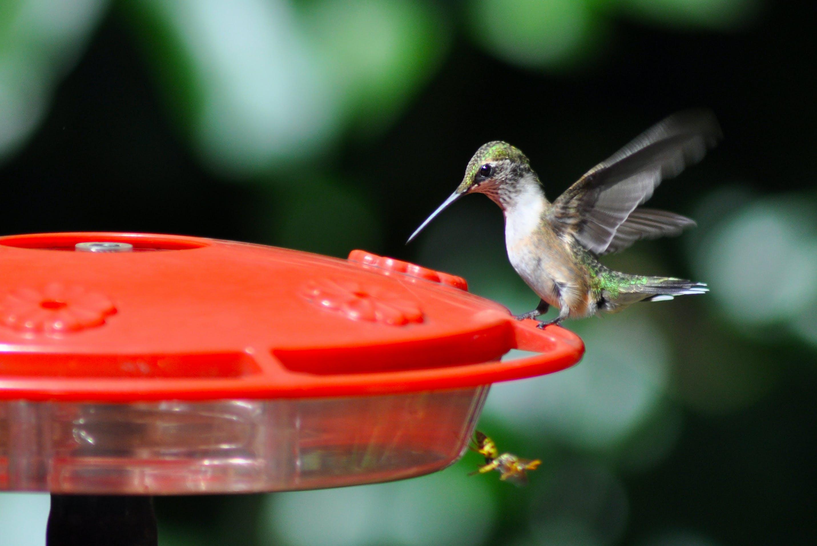 Green Bird on Red Bird Feeder in Bokeh Photography