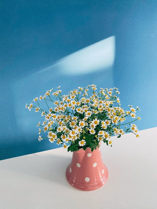 Blue and White Flowers in Pink Vase