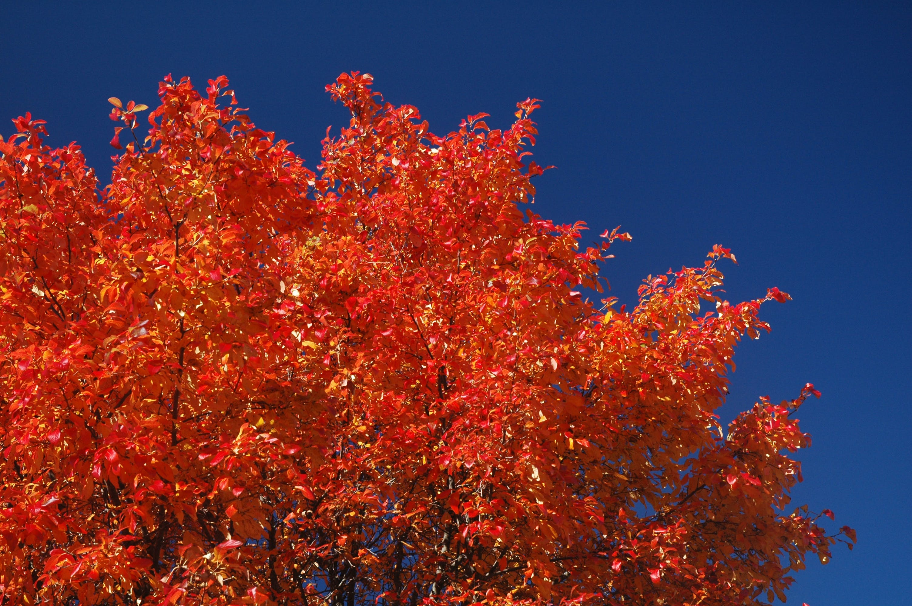 Free stock photo of fall color