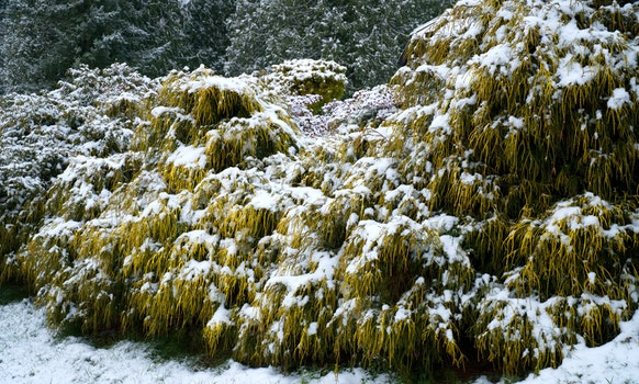 Photo of Plants Covered with Snow