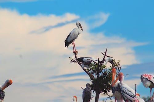 Free stock photo of birds, cloud, nature