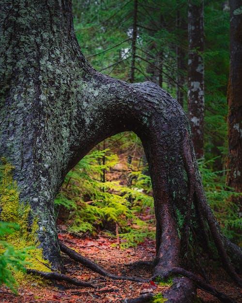 Photos gratuites de à couper le souffle, aboiement, arbre