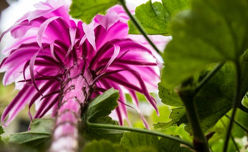 Gratis arkivbilde med blomst, canon, canont6, elskelig