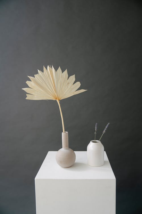 Ceramic vases with dried sun palm and fragile thin stalks on white cube against gray wall