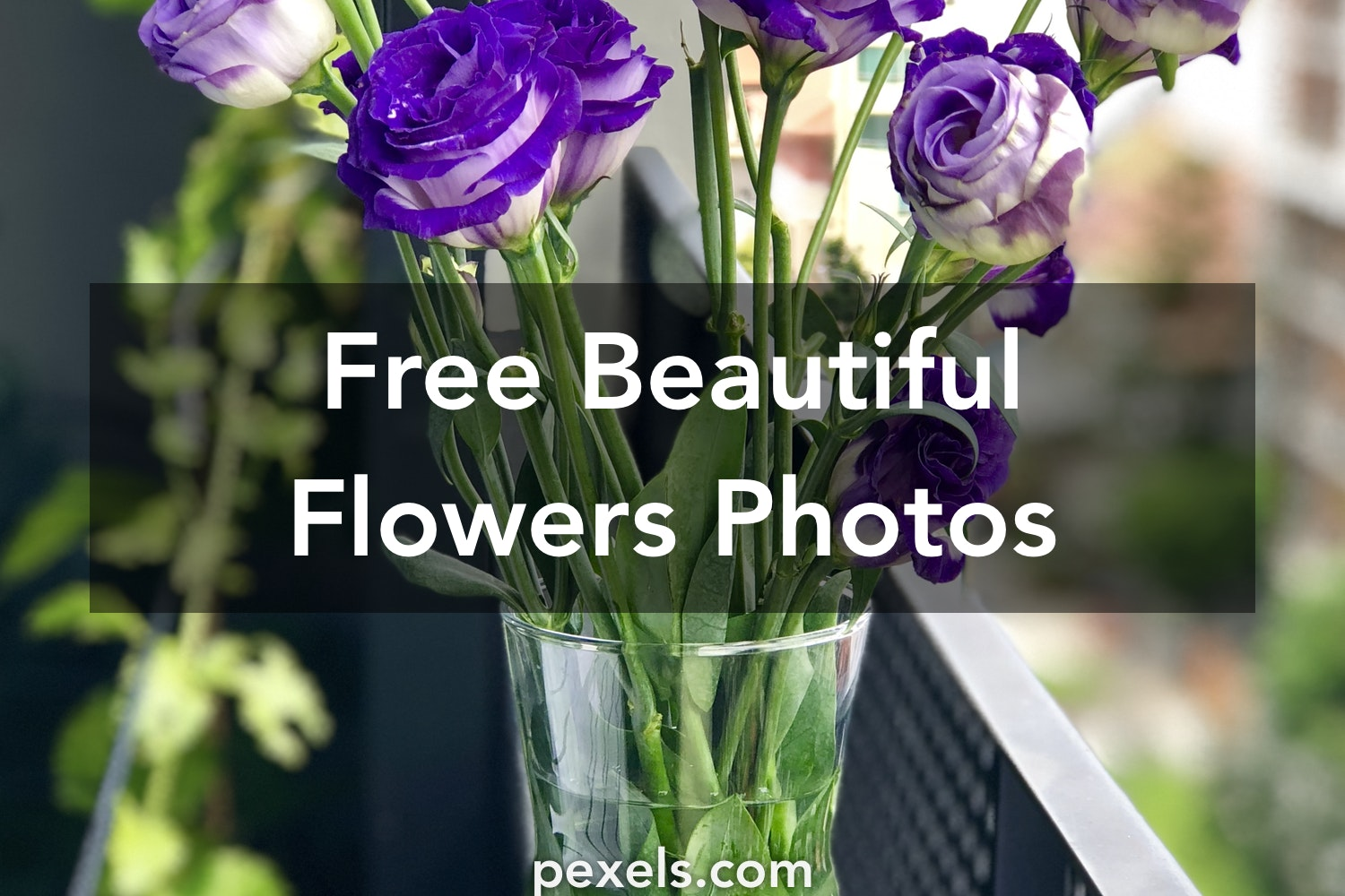 1000 Beautiful Beautiful Flowers Photos Pexels Free Stock Photos