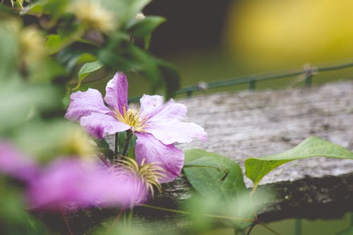 Free stock photo of afternoon, fence, flower
