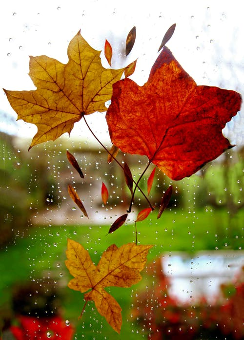 Free stock photo of autumn decoration, rainy day