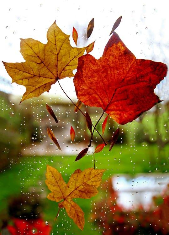 sadepäivä, syyskoristelu