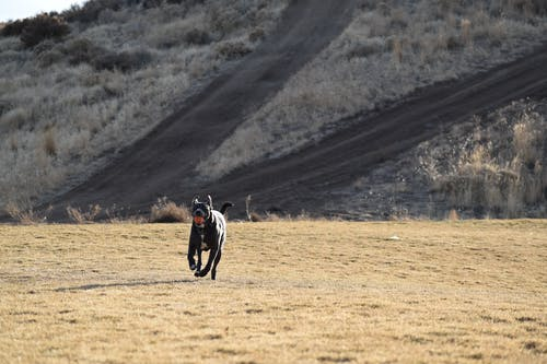 Foto d'estoc gratuïta de carreteres, desert, gos, herba