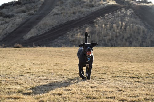 Ilmainen kuvapankkikuva tunnisteilla kenttä, koira, luonto, maisema