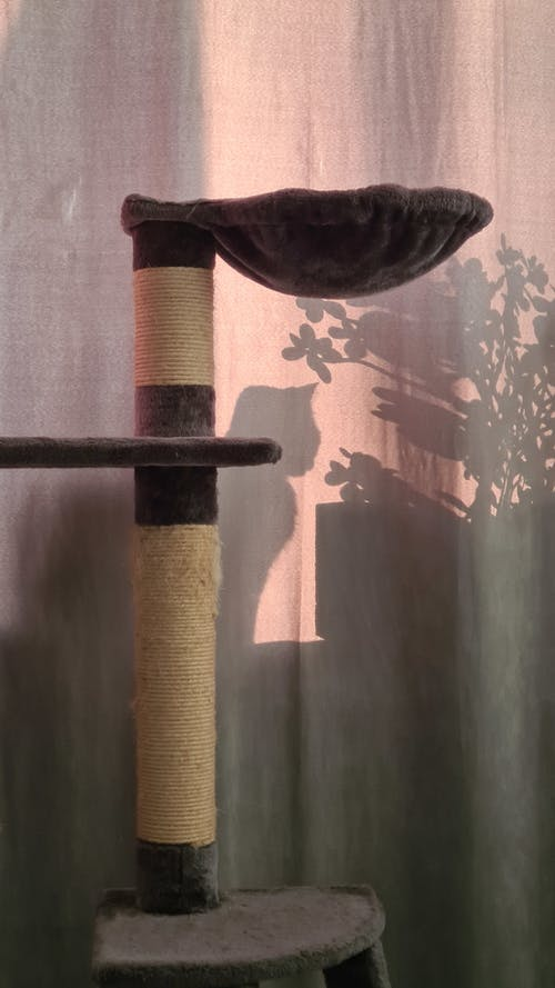 Free stock photo of cat tree, curtain, shadow