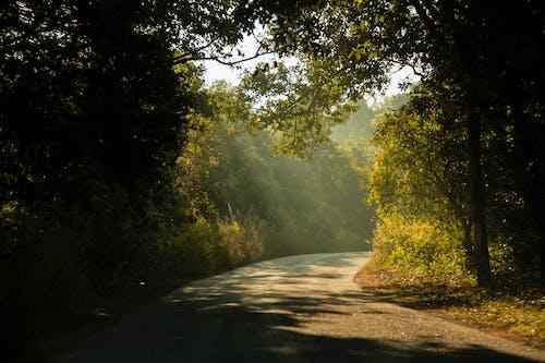 Fotos de stock gratuitas de asfalto, calzada, cubierta forestal, India