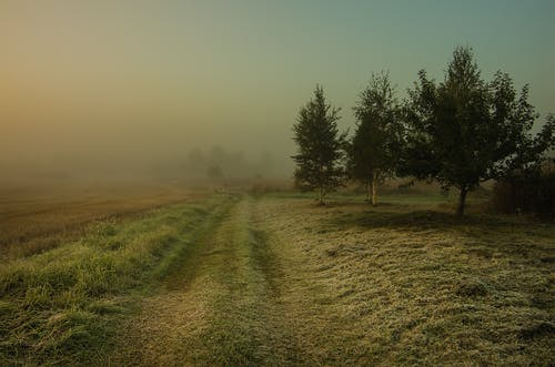 Gratis lagerfoto af frost, tidligt om morgenen, t¨åge
