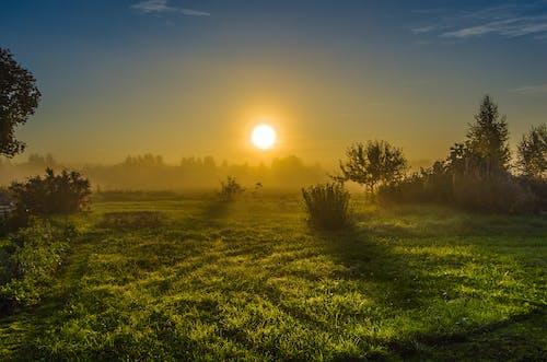 Gratis lagerfoto af solopgang, tidligt om morgenen, t¨åge