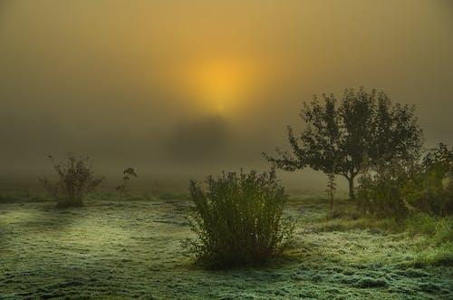 Gratis lagerfoto af rimdækket, solopgang, t¨åge
