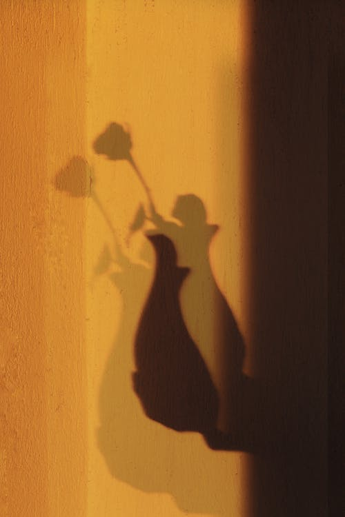 Shadow of blooming flower on long stem with leaves in vase on hand of person at sunlight