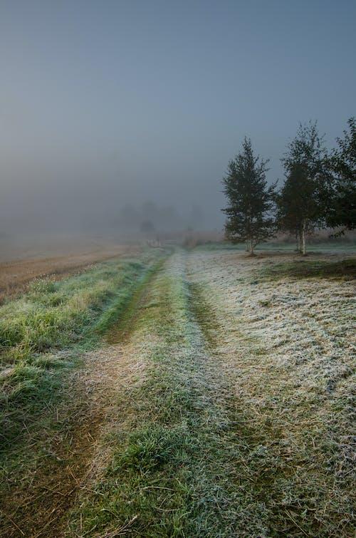 Gratis lagerfoto af letland, rimdækket, tåget, tidligt om morgenen