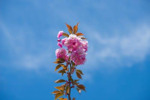 Free stock photo of flowers, mohan, nannapaneni