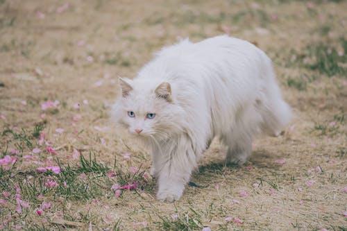 Základová fotografie zdarma na téma dívání, domácí mazlíček, jedno zvíře