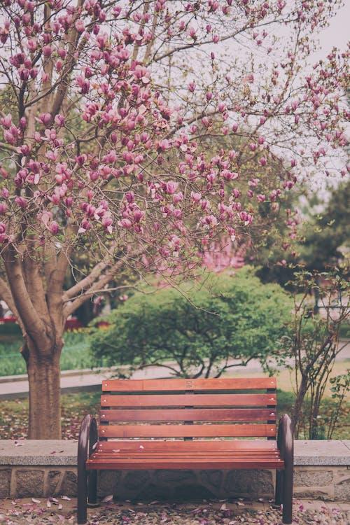 Základová fotografie zdarma na téma barva, dřevo, flóra