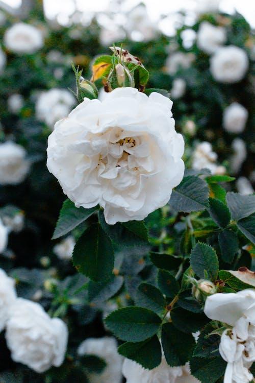 Foto profissional grátis de amor, ao ar livre, arbusto