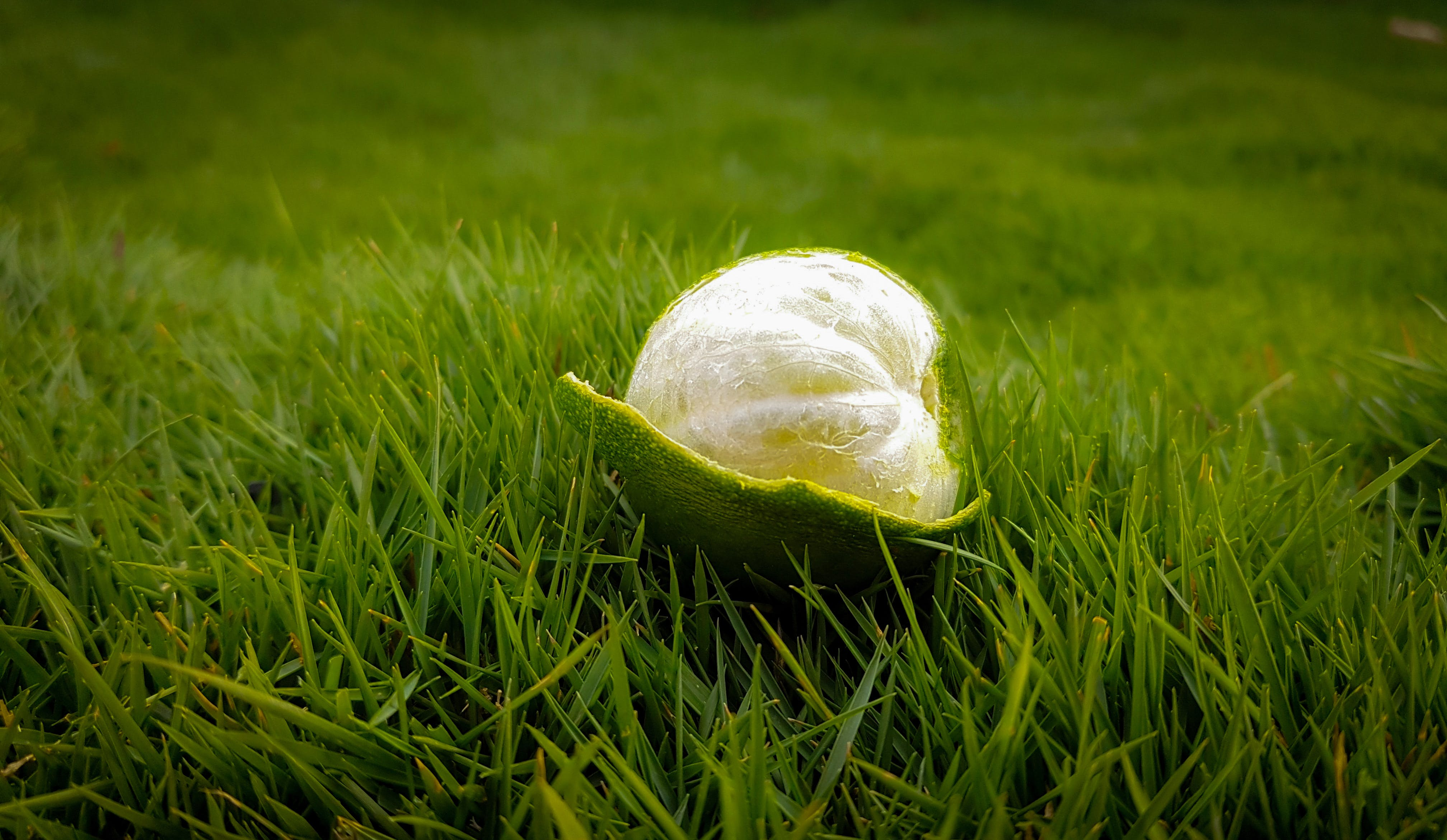 Peeled Green Lime on Green Grasses