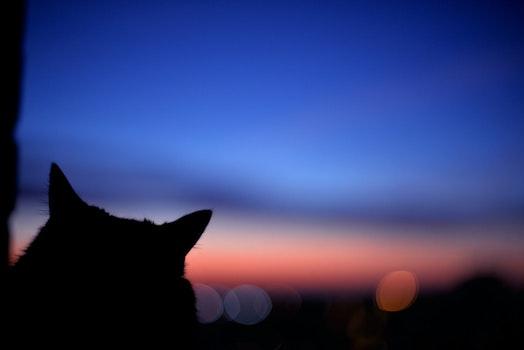 Free stock photo of sky, sunset, night, cat