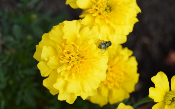 Free stock photo of flowers, yellow, plants, flower