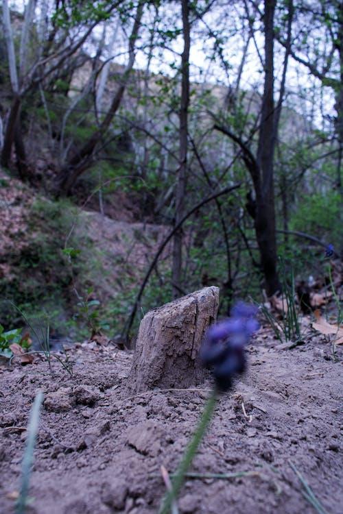Kostenloses Stock Foto zu bäume, baumstamm, dschungel