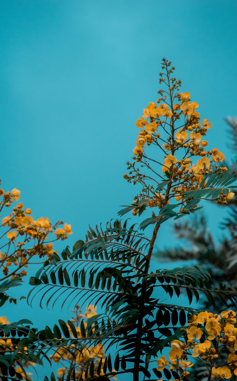 ağaç, büyüme, çevre, Çiçek açmak içeren Ücretsiz stok fotoğraf