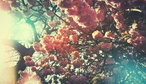 Kostenloses Stock Foto zu baum, bäume, blühen