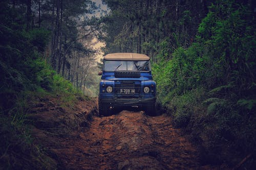Foto d'estoc gratuïta de acció, arbres, aventura, bosc