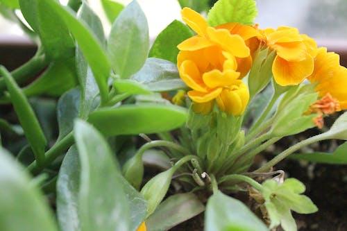 Free stock photo of beautiful flower, everything yellow, flowers