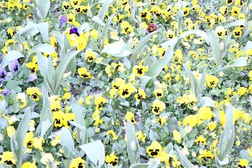 Free stock photo of everything yellow, mellow, mellow yellow