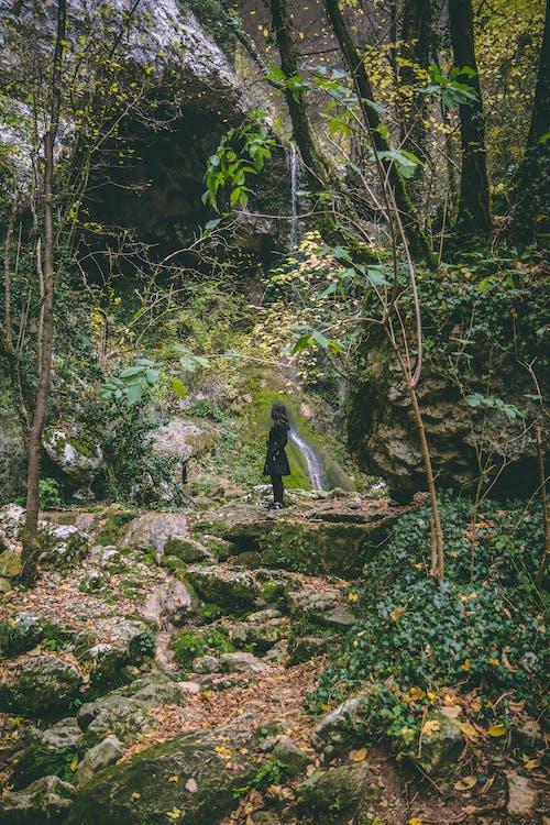 Foto profissional grátis de ao ar livre, árvores, aumento, cênico