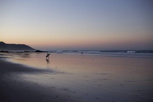Free stock photo of active, activity, adventure, beach
