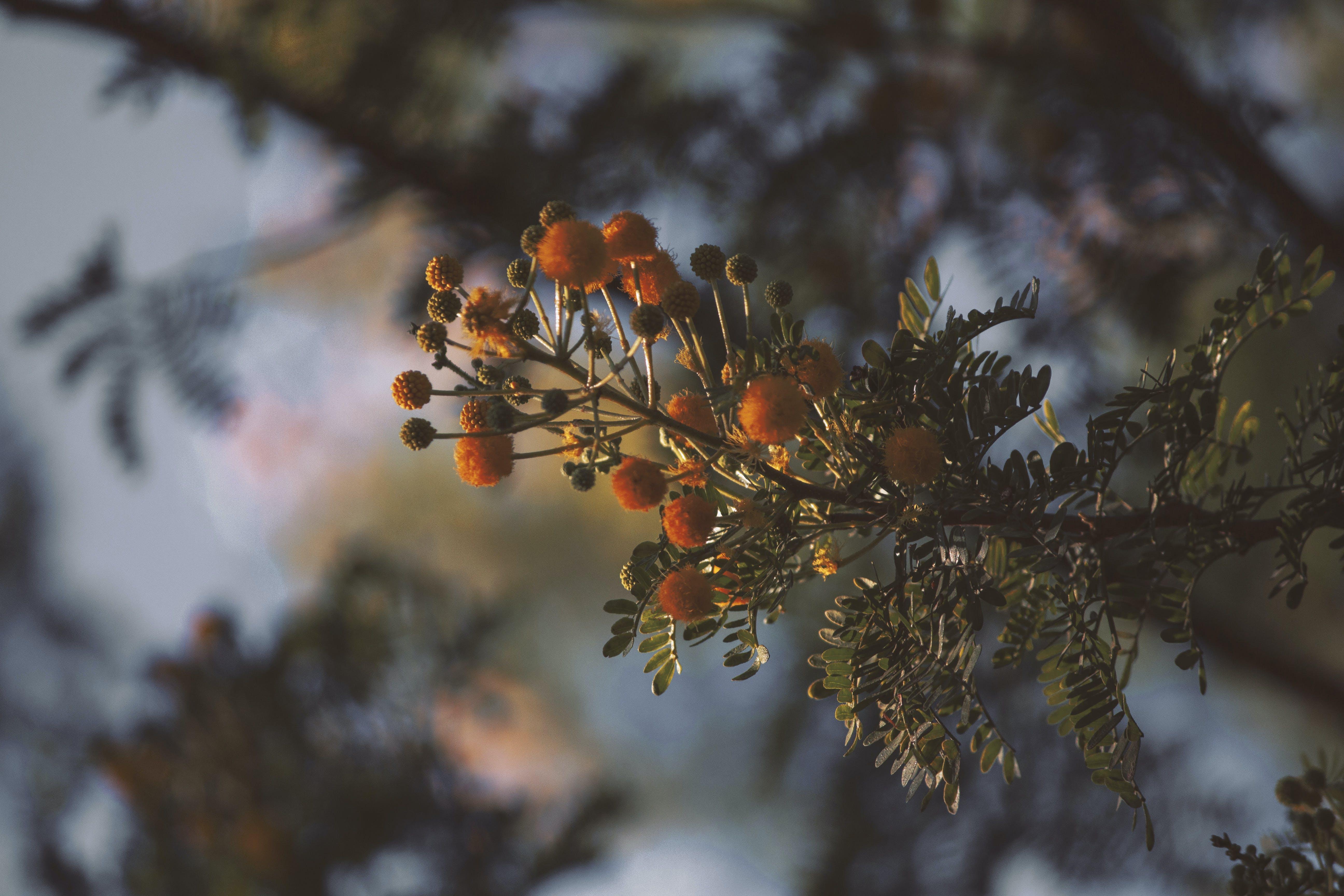 Selective Focus Photography of Round Orange Plant