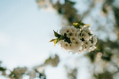 Free stock photo of flora, nature, spring