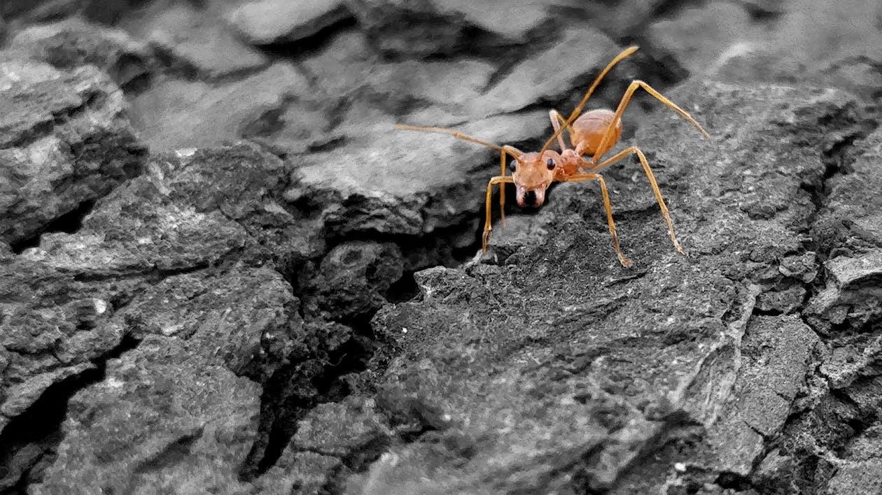 Free stock photo of ants