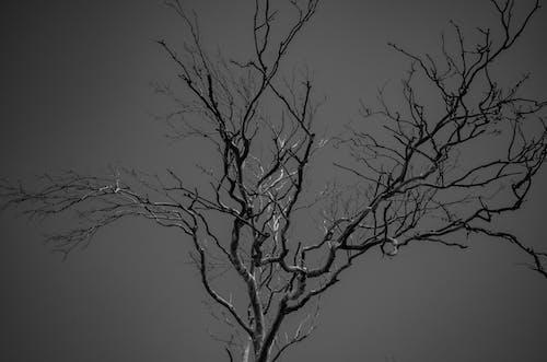 Foto profissional grátis de árvore nua, conhecimento, escala de cinza