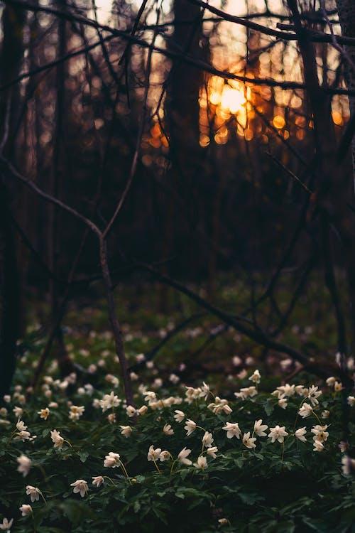 Gratis lagerfoto af blomster, flora, grene, hvide blomster